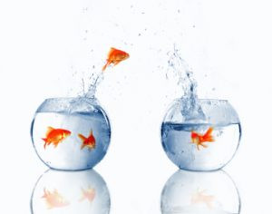 A goldfish jumping from a fishbowl into another one
